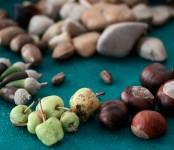 Imagen de recetas de otoño