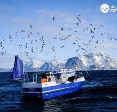 A la búsqueda del bacalao Skrei. Islas Lofoten