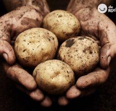 Patatas. Curiosidades y cómo conservarlas