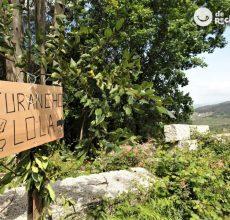 Furanchos. Una forma de comer y beber en Galicia