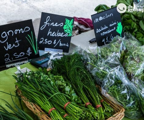 Ramilletes de hierbas aromáticas y aderezos. Cuando la comida es aroma.