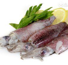 Calamares ¿Qué son?¿Marisco o pescado? Recetas con calamares